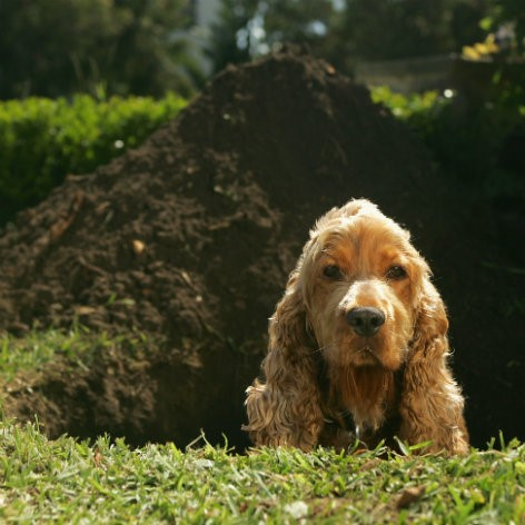 Puppy Worming Schedule